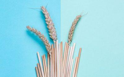 Pailles écologiques de blé