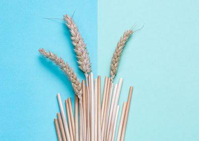 Pailles écologiques à base de blé